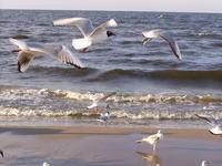 Sea-gulls 4