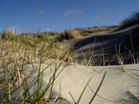 Dune Grass 002