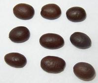 coffee beans 9