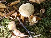 mushrooms 4