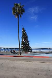 Ocean Beach Xmass Tree