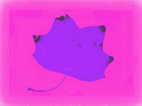 Pastel Leaf 2