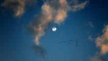moon iii