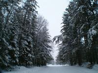 Winter Series 1
