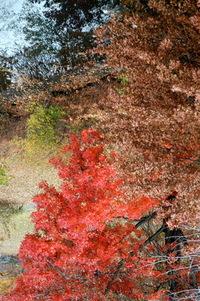 Boston Ma in the fall of 2004