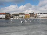 Swans in Denmark
