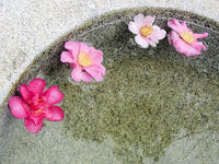 Flower Spa