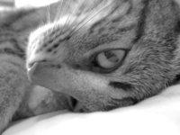 I love my kitty 1