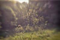 Nature Close-Ups 1