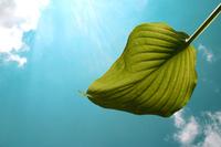 Pokoj - zelený list na pozadí s modrou oblohou