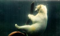 floating bear 3