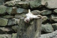 Zoo pics 1
