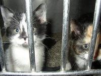 Kittens in Jail 3