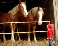 little girl, big horses