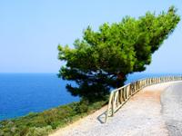 Pine-Egee sea