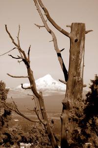 Snow-Capped Peaks 2