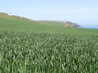 Field in South of Ireland