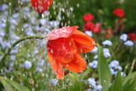Raining Flower