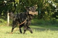 dog education 4