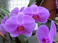 Flower close-up 3