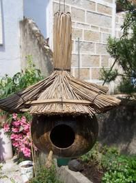 bird coco nest