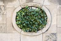 oval ivy stone window