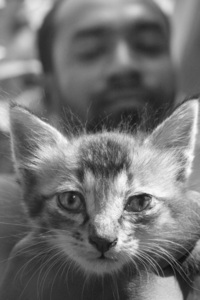 Kitten 6