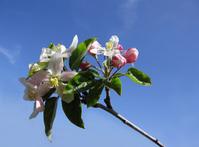Primavera a Ponza