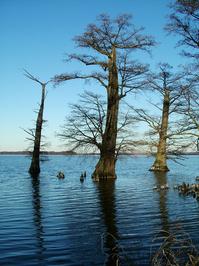 Reelfoot Lake in Tennessee 4