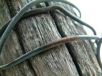 oldknots 3
