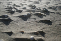Shells on windy beach 2