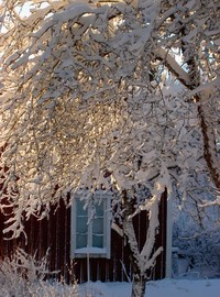 Sunny winter day 1