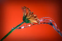 Watering the Flowers 4