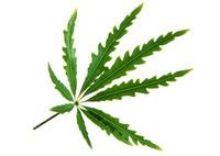 Leaf 101