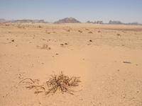 Wadi Rum, Jordan 4