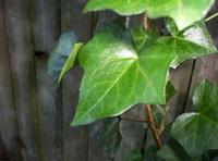 Miscellaneous Plants 1