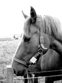 Shadowy Horse