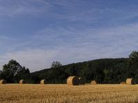 Agricultural art