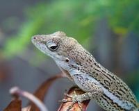 Gecko Macro