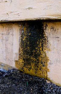 Urban Decay Rust