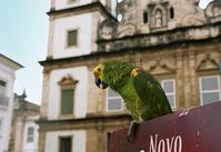 Parrot in Salvador de Bahia