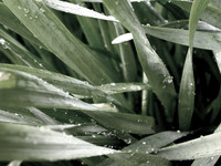 wet leaves
