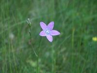 flower_0 2
