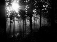 Sunglight through trees 1
