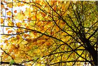 Fall Day 3