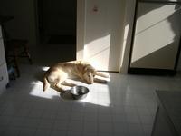 Sunbeam Dog