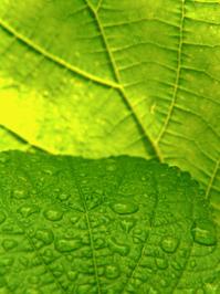leafs & raindrops