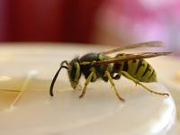 wasp drinks coke