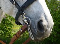 Horsenose