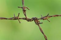 Rusty barbwire